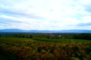 Weinsichten